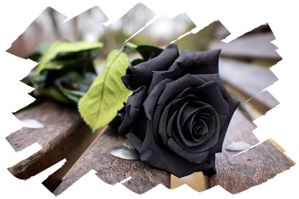 Black roses for Marlies Adamy...